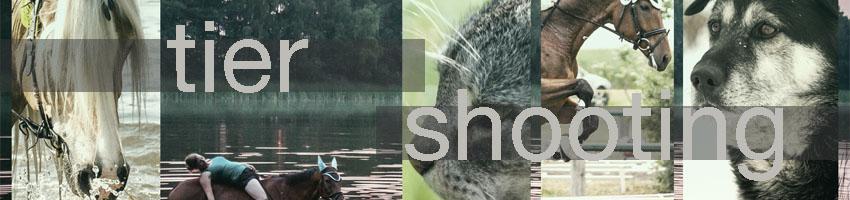 Arbeiten und Preise FOTOhunka Tiershooting