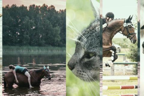 Permalink to:Tiershooting & Turnierfotografie